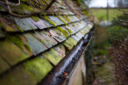 Moss On Roof Tiles Is It A Problem Abbey Roofing